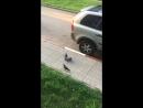 царство птиц