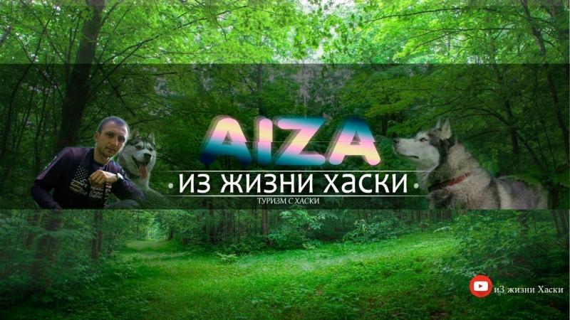 Forest live haski