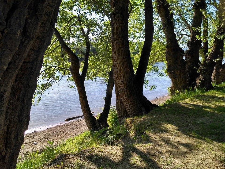 В течение месяца во дворе на Коненкова удалят мешающие жильцам ветви деревьев