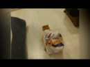 Коты и пакеты. Смешное видео про котов! Советую посмотреть.