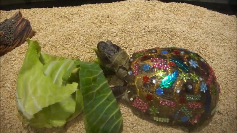 Волшебный пень и черепаха Аха