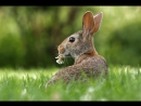 Hares in the family estate