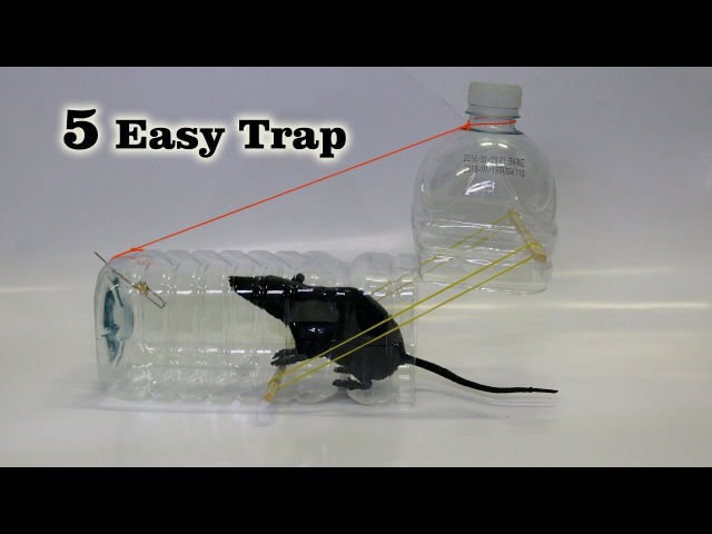 5 Easy Mouse Rat Trap