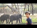 Minnu at the Zoo Learn Animals for Children and Toddlers Elephant Giraffe Crocodile Lion