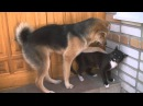 Драка Пес и Кот dog and cat fight Смешное видео funny video NEW