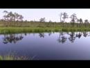 В поисках неизвестных озер Незаконченный поход Вологодские болота yklip scscscrp