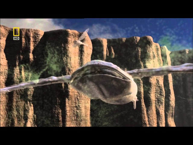 National Geographic: Жизнь в других мирах. Голубая луна national geographic: ;bpym d lheub[ vbhf[. ujke,fz keyf