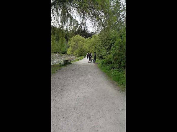 Man caught STEALING Gosling from Stanley Park