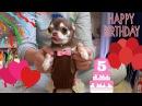 День рождения чихуахуа Фондю. Нам 5 лет! Открываем подарки