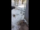 охота на зайца 2