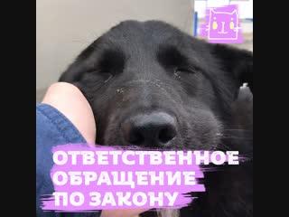 Госдума приняла закон об ответственном обращении с животными