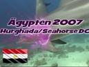 Delfine in Ägypten Red Sea Diving Hurghada Erg Abu Salama Tauchen
