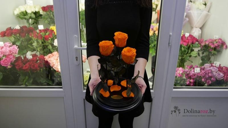 Как выглядит 3 розы в колбе? - Купить вечную розу в колбе в Минске