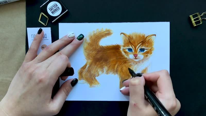 SM_lesson_kitten_insta