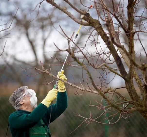Обработка сада осенью  эффективные приемы против болезней и вредителей.