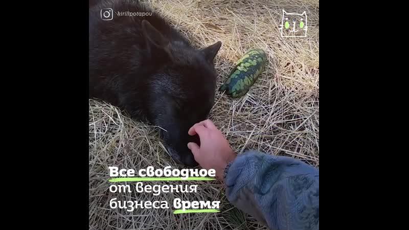Волчий друг
