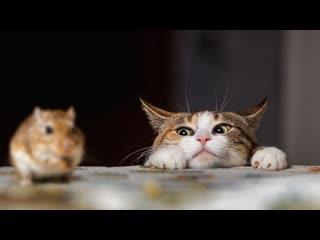 Смешные коты | Подборка за неделю #22 | Котопятница