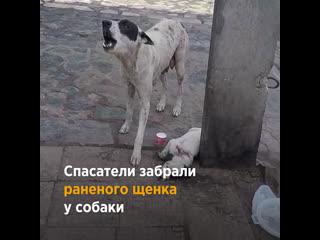 Воссоединение мамы-собаки и щенка
