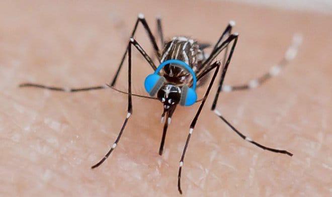 Учёные включали комарам дабстеп, чтобы выяснить, как музыка влияет на их половое и пищевое поведение