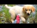 Пес Наполеон - добрый, отличный семейный фильм про собаку 1995