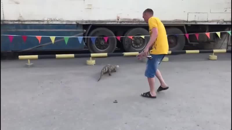 В Новосибирске из передвижного цирка сбежал крокодил и бегал по городу По улице ходила большая крокодила