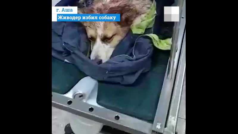 Живодер из соседнего региона избил собаку