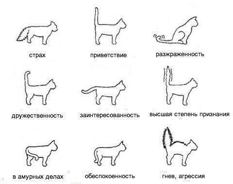Учимся понимать кошек и котов