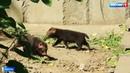 Трогательные кадры из московского зоопарка: родились необычные щенки