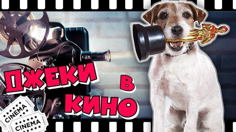 ДЖЕКИ В КИНО Лучшие фильмы с Джек Рассел терьерами