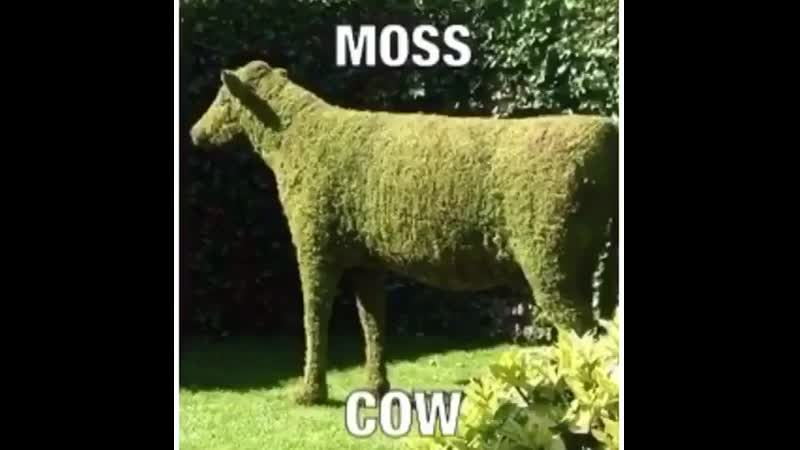 Mos cow