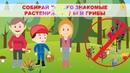 Правила безопасного поведения в лесу для детей