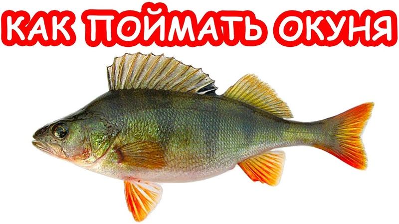 Как поймать окуня на микроджиг. Рыбалка с блондинкой на ультралайт. Рыбалка 2019