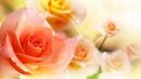 МАНТРА для любви и счастья в отношениях