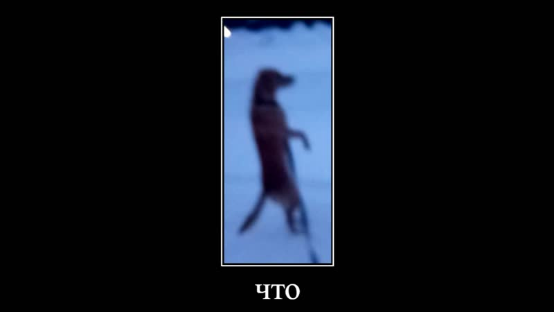 страшные кадры с места гуляния пса