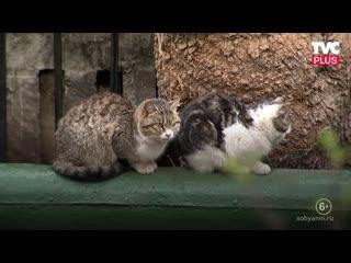 Волонтеры смогут посещать приюты для бездомных животных