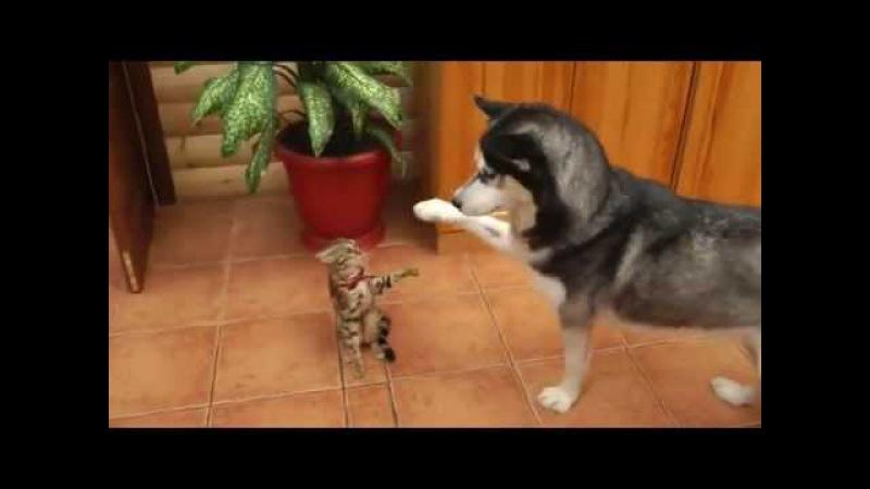 Хаски лучшие!играют с щенками и котами и поют)