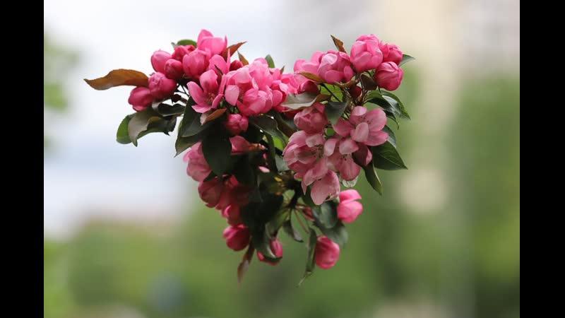 Весенний экспресс...фото Игоря Шевченко...муз. А.Радионова