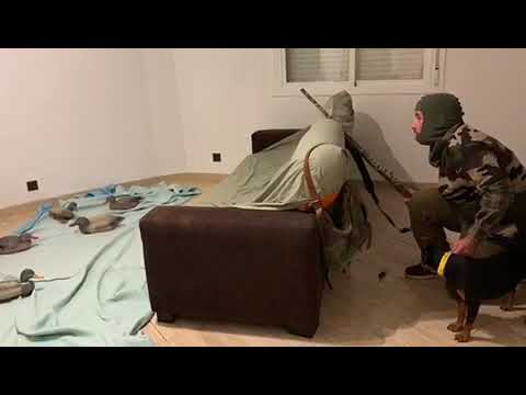 Карантин дома охота в квартире