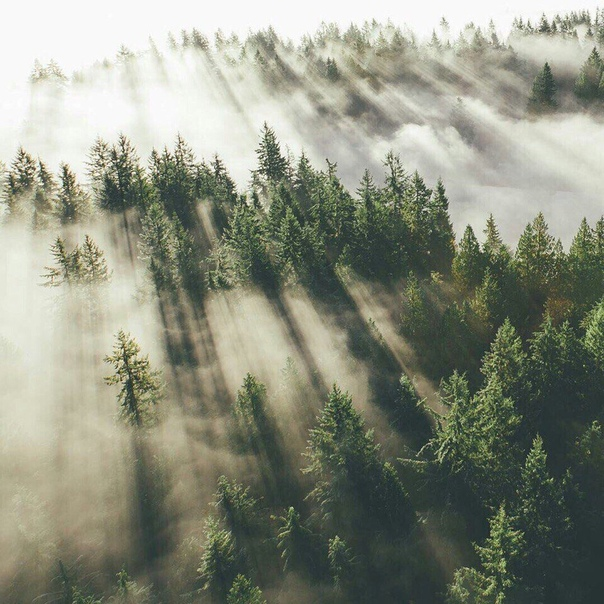 Природа выдаёт тебе самого себя: облезлого, нищего, с кипящей от внутренних диалогов головой