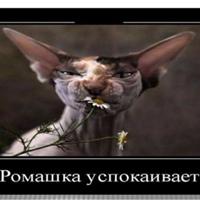 Фото профиля Эли Цвяточек