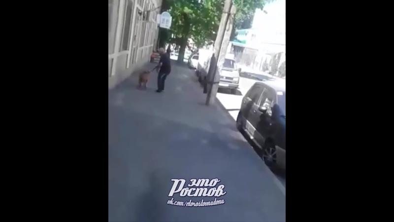 Опасный выгул собаки хамоватым хозяином - 16.06.19 - Это Ростов-на-Дону!