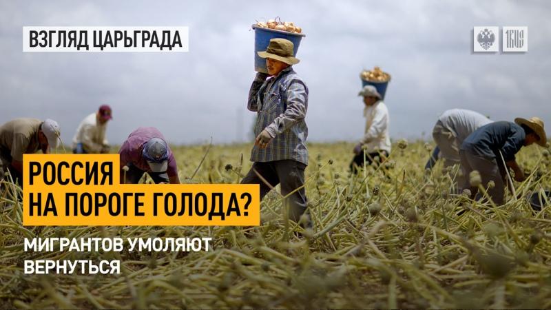 Россия на пороге голода Мигрантов умоляют вернуться