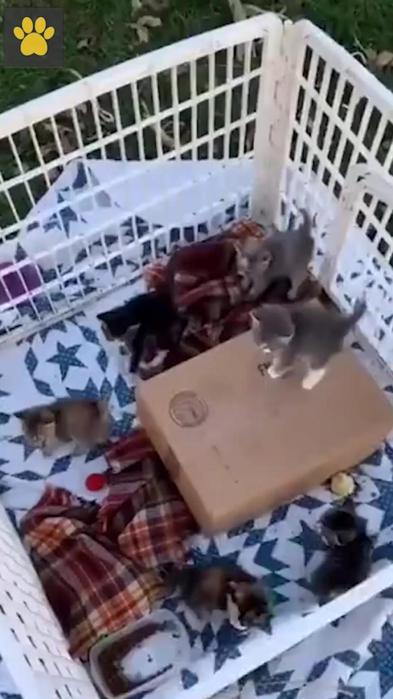 Котята синхронизировались при виде собакена
