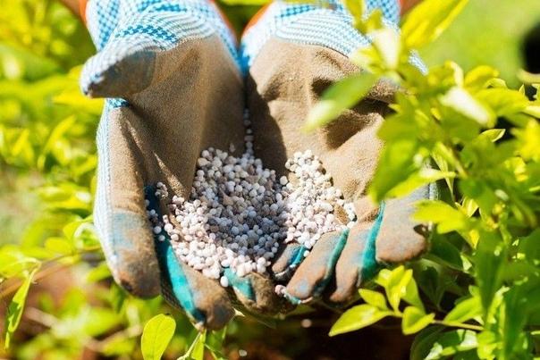 Подбираем удобрения для огорода
