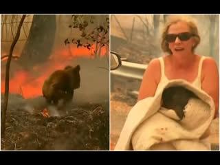 Международная панорама: Спасение животных во время пожара в Австралии