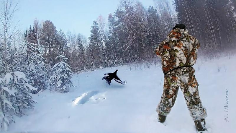 Охота на тетерева на лунках 2021. Закрытие сезона. Black grouse hunting