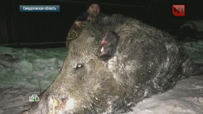 В Челябинске охотник застрелил лесное чудовище-мутанта