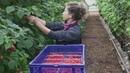 Castleton Fruit Ltd - Recruitment (English)