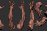 body texture 3d - 735×375
