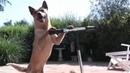 Про животных. СМЕШНЫЕ собаки. Прикольное видео!